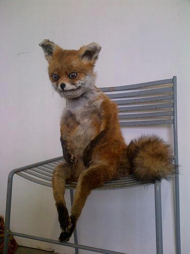 Unfantastic Mr Fox