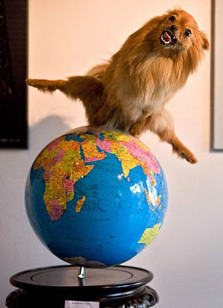"""I'm on top of the world!!"""